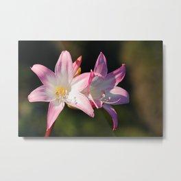 Amaryllis belladonna Metal Print