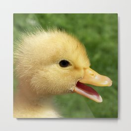 small duckling Metal Print