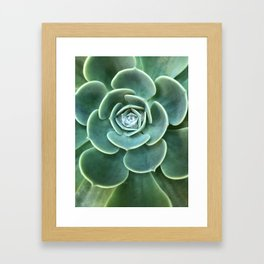Diamond Succulent Framed Art Print