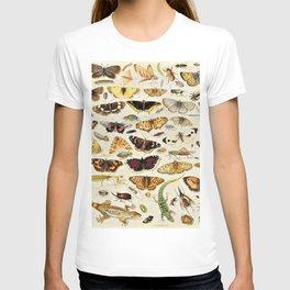 "Jan van Kessel the Elder ""An Extensive Study of Butterflies, Insects and Seashells"" T-shirt"