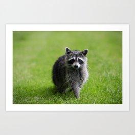 Curious Raccoon Art Print