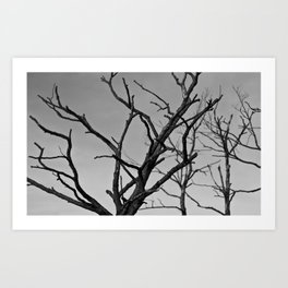 Clawed Nature Art Print