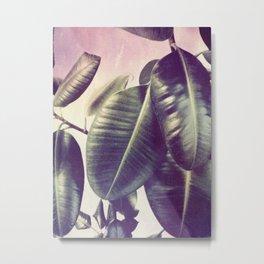 Ficus Elastica #2 Metal Print