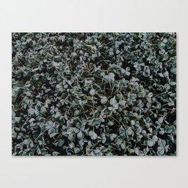 Last Frost of the Season Canvas Print
