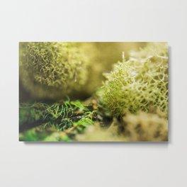 Macro shot of moss Metal Print