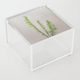 fern Acrylic Box