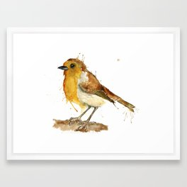Red Robin Framed Art Print
