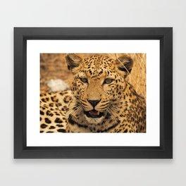 Wild leopard Framed Art Print