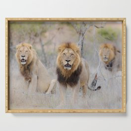 Male lion photo 3 Serving Tray