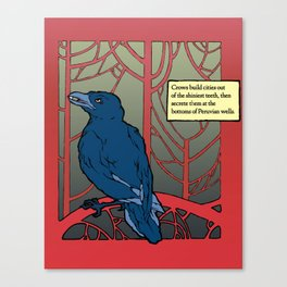Crow habits. Canvas Print