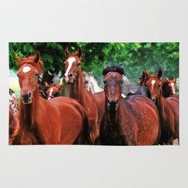Polish Arabian Mares Rug