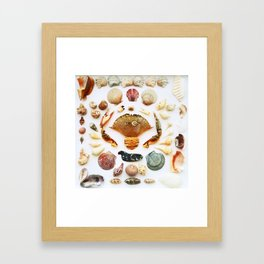 Barnacle on Board Framed Art Print