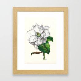 Heart of a Magnolia Framed Art Print