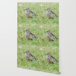 Pipit on the Lawn Wallpaper