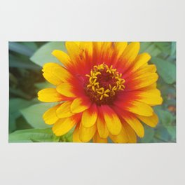 Zinnia on fire Rug