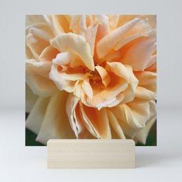 Peach Colored Rose Mini Art Print