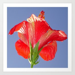 Side View of Scarlet Red Hibiscus In Bright Light Art Print