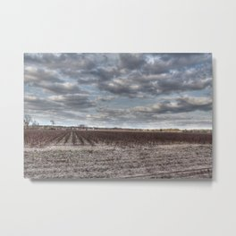 Cotton Season is Over in the South Metal Print