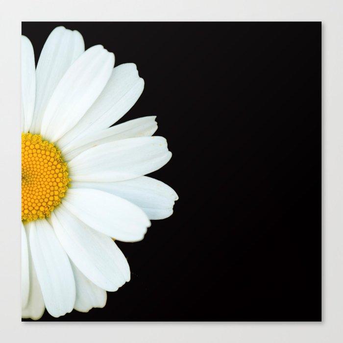 Hello Daisy - White Flower Black Background #decor #society6 #buyart Leinwanddruck