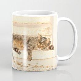 The sun shines on all cats equally Coffee Mug
