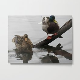 Ducks at Wapato Park Metal Print