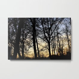 Sunset on the forest Metal Print