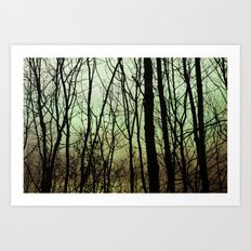 veil of trees Art Print