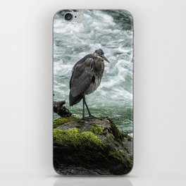 Great Blue Heron on the McKenzie, No. 1 iPhone Skin