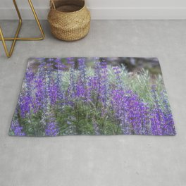 Color in the High Desert Rug