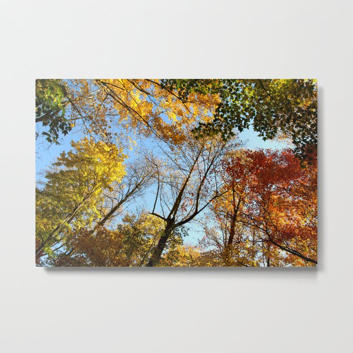 Autumns Up!   (A Fall View)  Metal Print