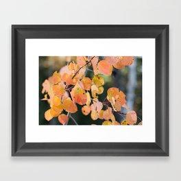 aspen leaves. Framed Art Print