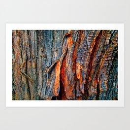 Bark Texture 22 Art Print