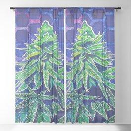 Purple Kush Sheer Curtain