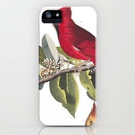 Cardinal Grosbeak, John James Audubon iPhone Case