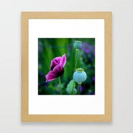 Oriental Poppies Framed Art Print