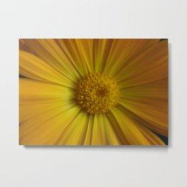 Yellow Aster Metal Print