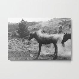 Horse Shaking Dust Cloud Metal Print