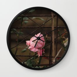 Rose flower growing on the iron grid Wall Clock