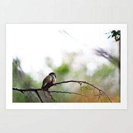 Nature at its finest  Art Print