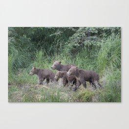 Four Brown Bear Cubs Canvas Print
