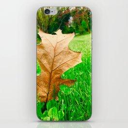 A Walk Through The Seasons iPhone Skin