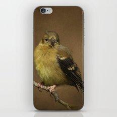 Baby Female Goldfinch iPhone & iPod Skin