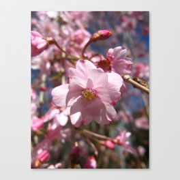 Perfect - Pink Cherry Blossom Canvas Print