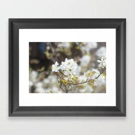 Dainty Nature XI Framed Art Print
