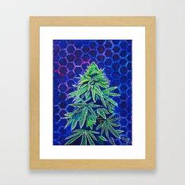 Purple Kush Framed Art Print