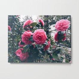 Camellias in Bloom Metal Print