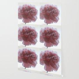 Pink Carnation Wallpaper