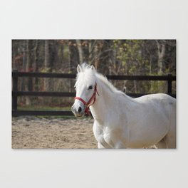 Pretty Penny Canvas Print