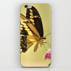Giant Swallowtail iPhone Skin