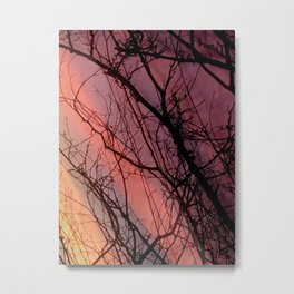 Abstract Photograph Tree with striped sunset sky Metal Print